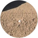 A plugged sand shot can be saved if you know how to use gravity.